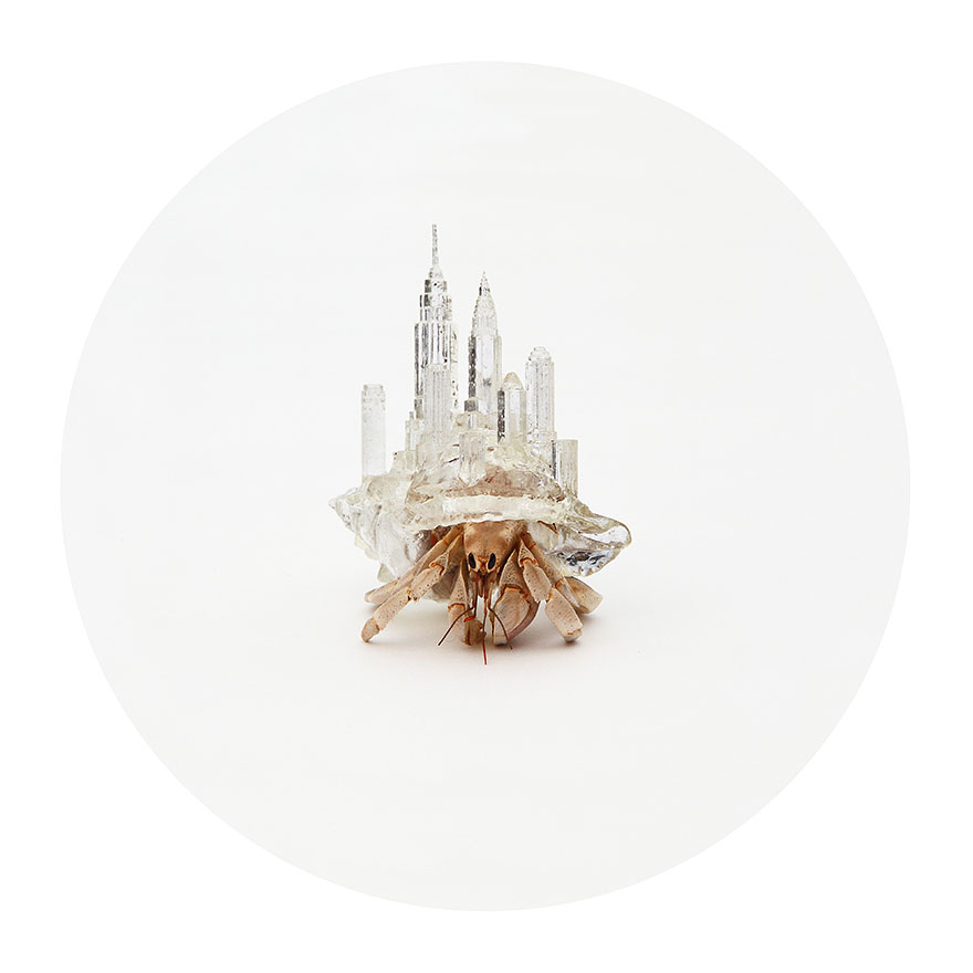 Artist 3d Prints City Shaped Shells For Hermit Crabs Bored Panda