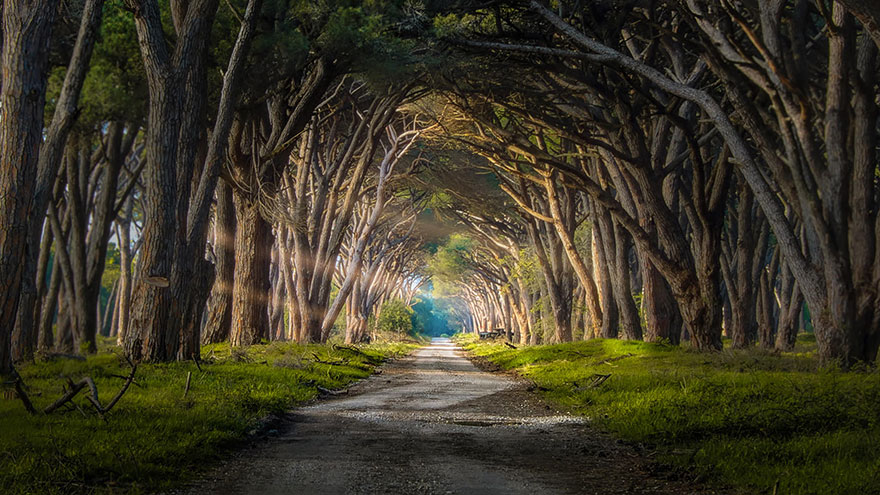 28 magical paths begging to be walked bored panda Pathway images
