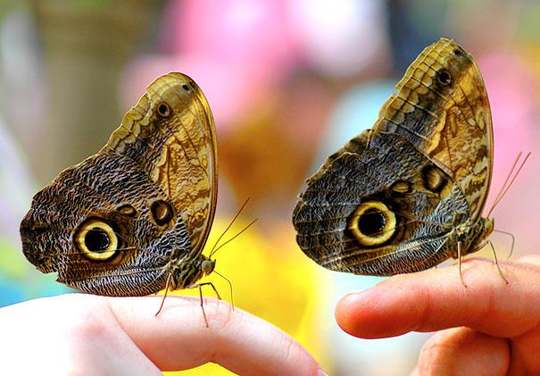 animal-twins-two-similar-lookalikes-206
