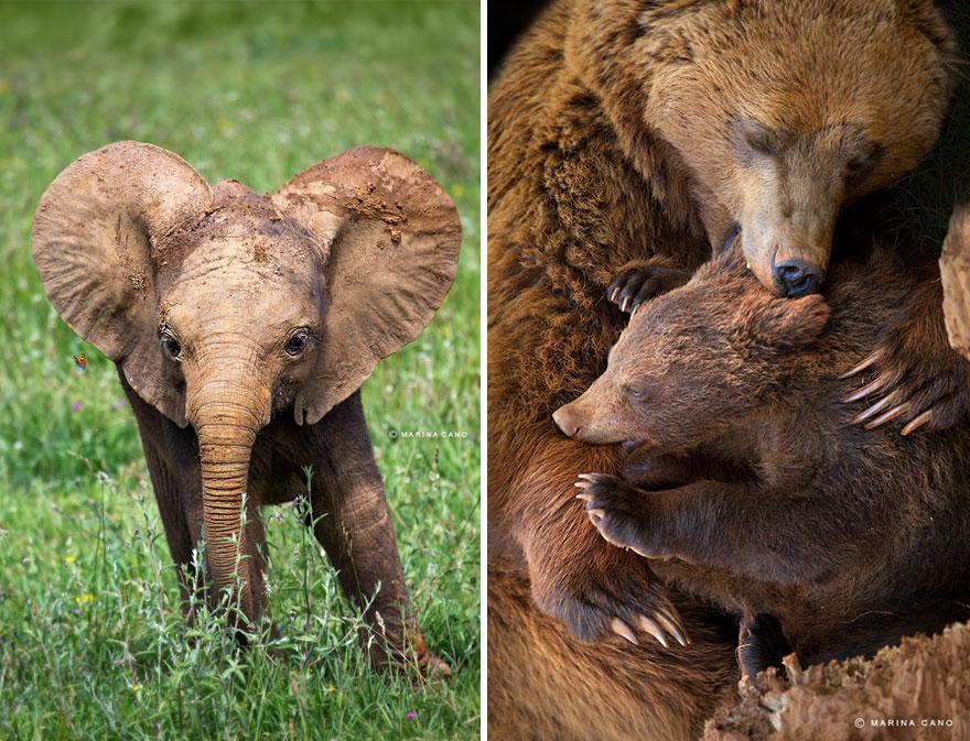 animal-wildlife-photography-marina-cano-1