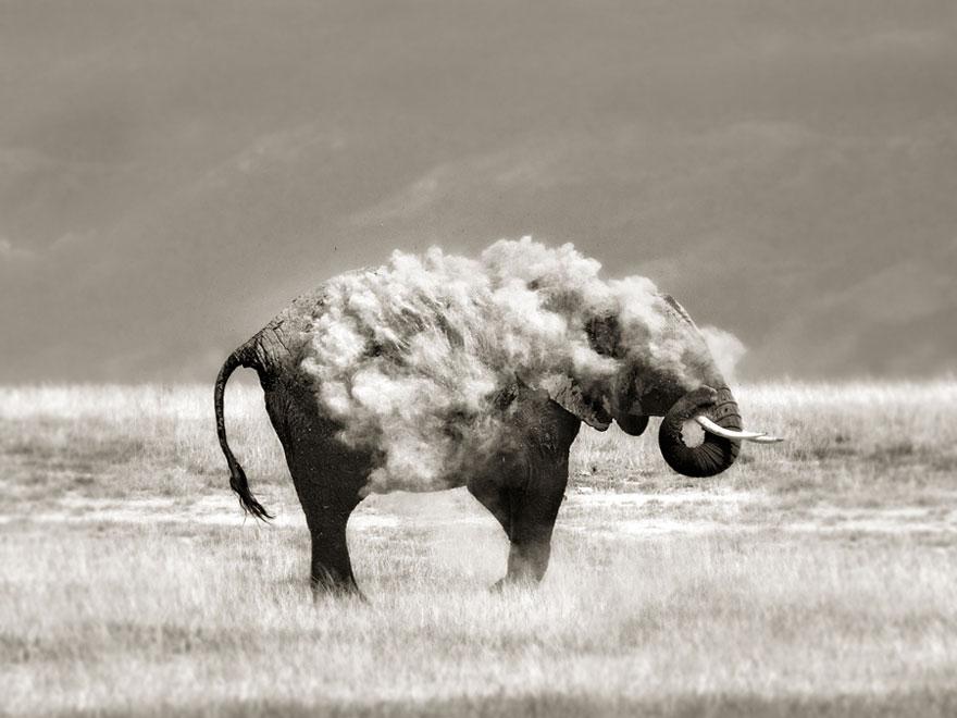animal-wildlife-photography-marina-cano-17