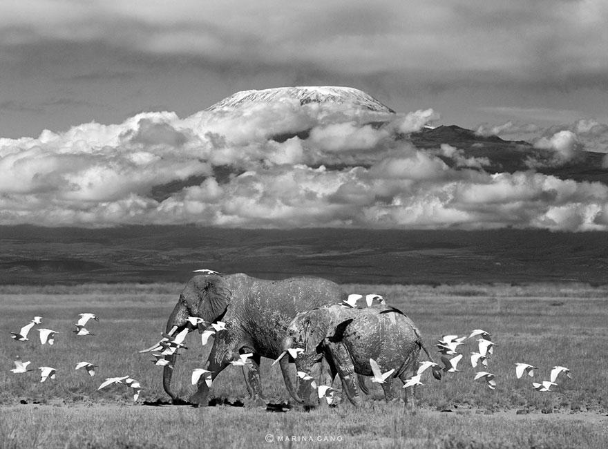 animal-wildlife-photography-marina-cano-27