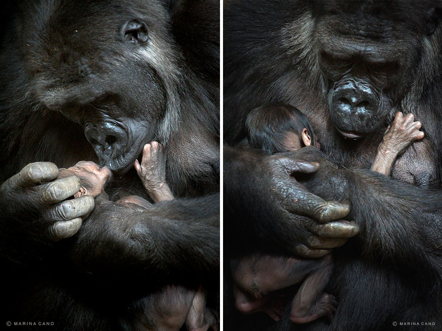 animal-wildlife-photography-marina-cano-3