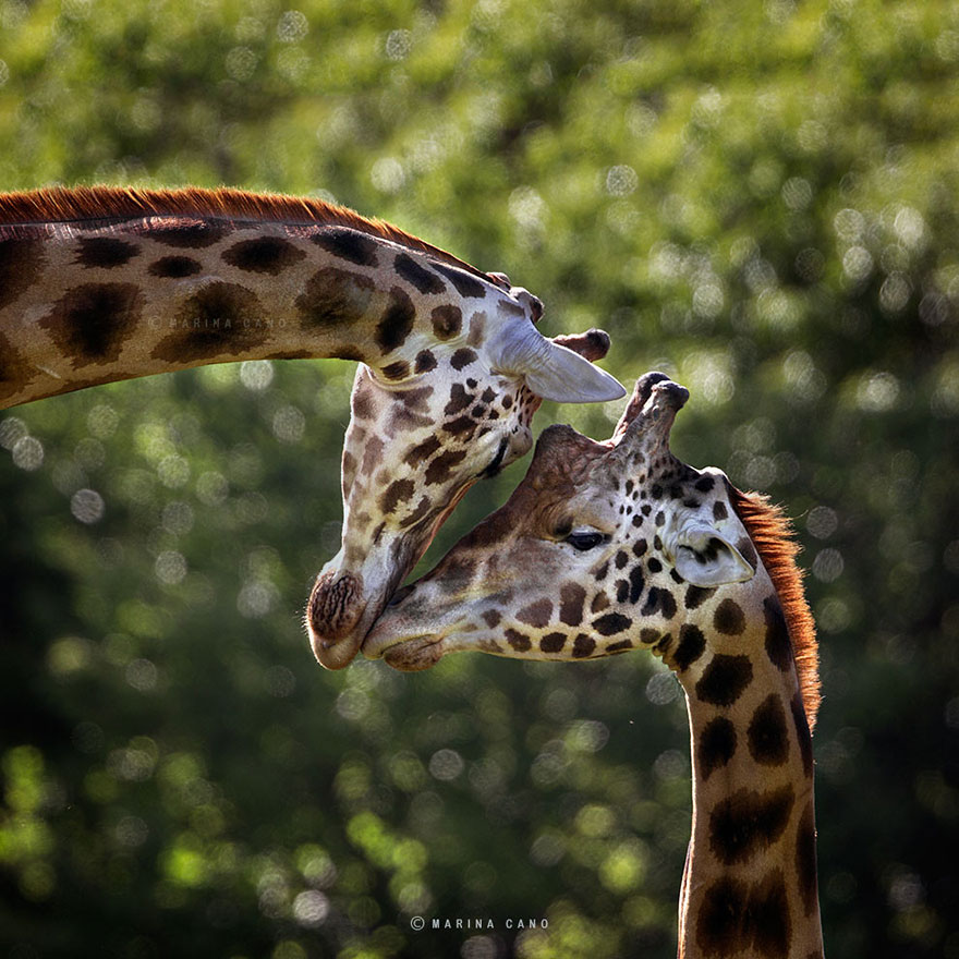 The Majestic Beauty Of Wild Animals Captured By Marina ...