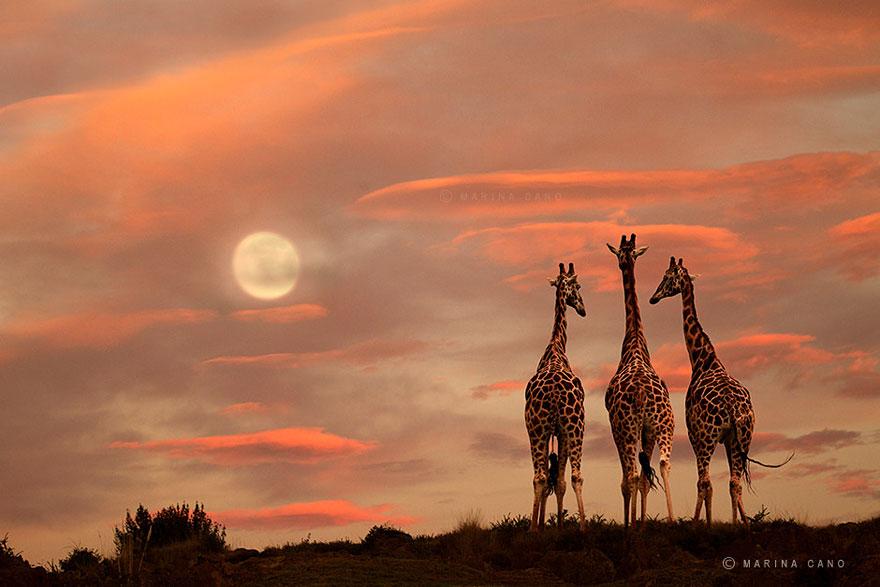 animal-wildlife-photography-marina-cano-9