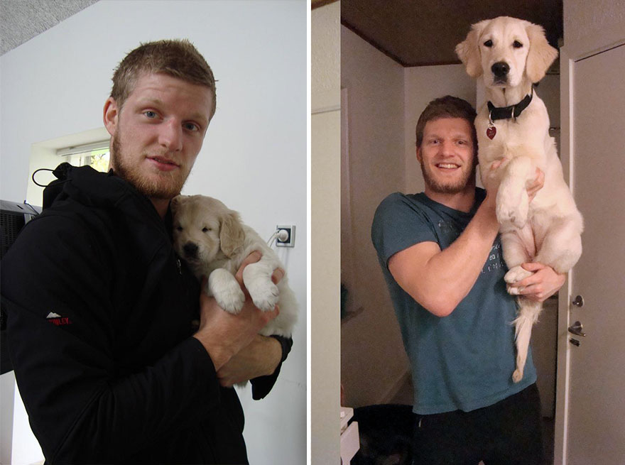 animals-before-after-then-now-45