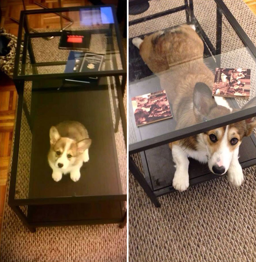 10Stories Showing That Life With Pets IsNever Boring