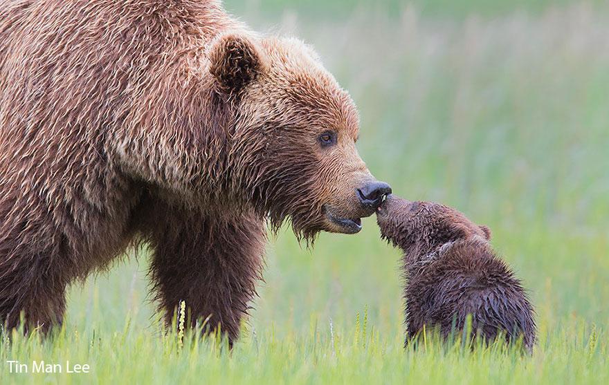 bear-photography-13