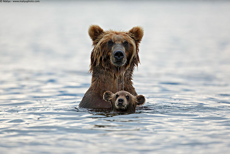 bear-photography-14