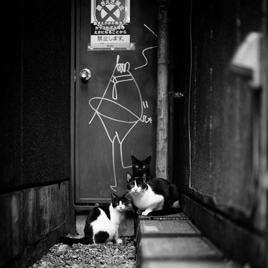 cat-black-and-white-photography-14