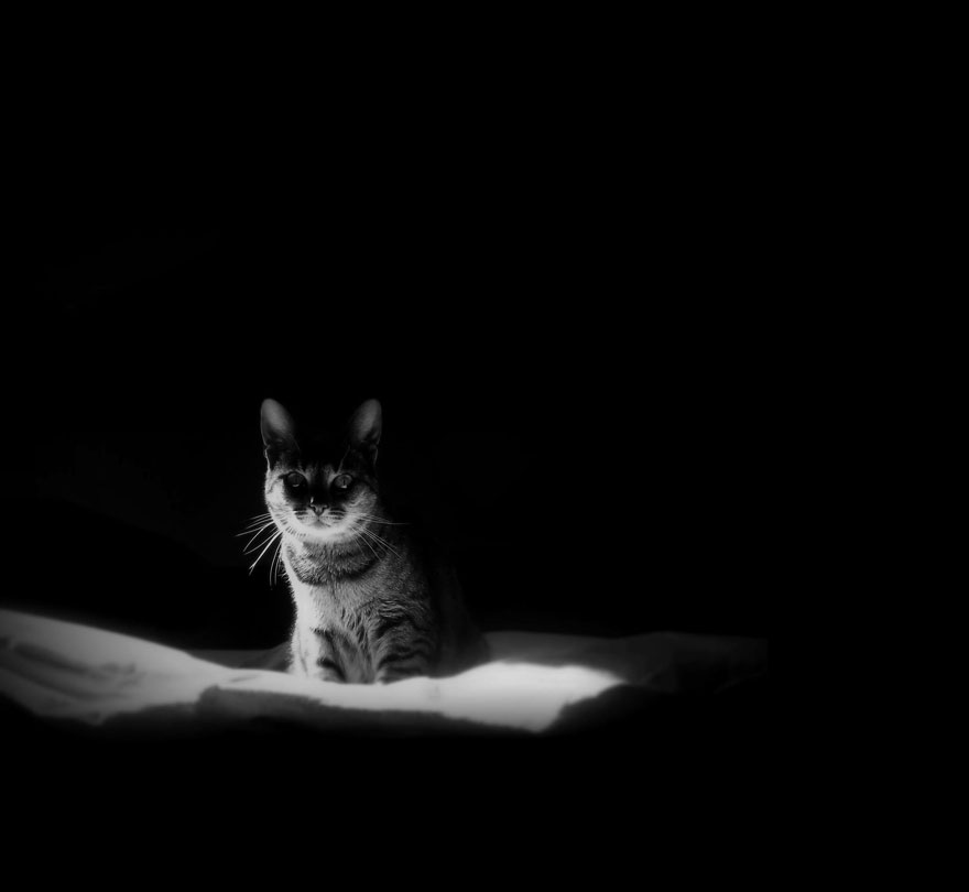Cat black and white photography 9