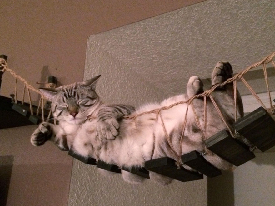 moveis-para-gatos-06