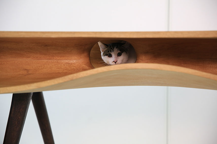 moveis-para-gatos-08