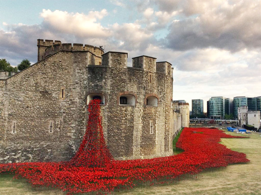 Poppies Pour Like Blood From The Tower Of London To - Tower of london river of poppies