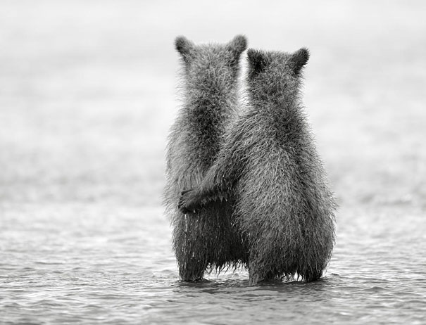 cute-animals-twins-14