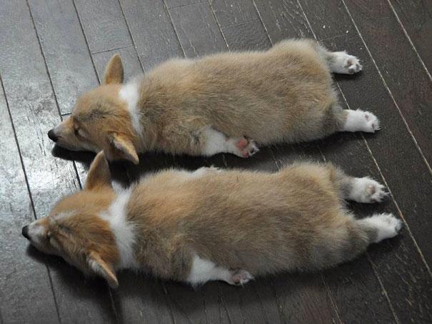 cute-animals-twins-15