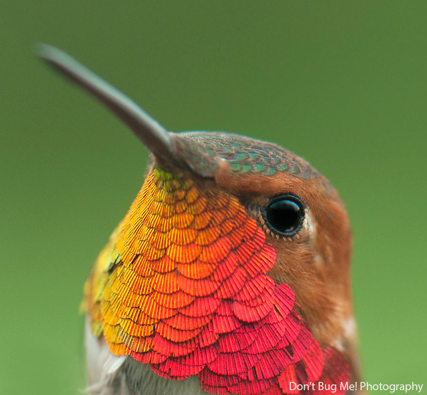 cute-beautiful-hummingbird-photography-121