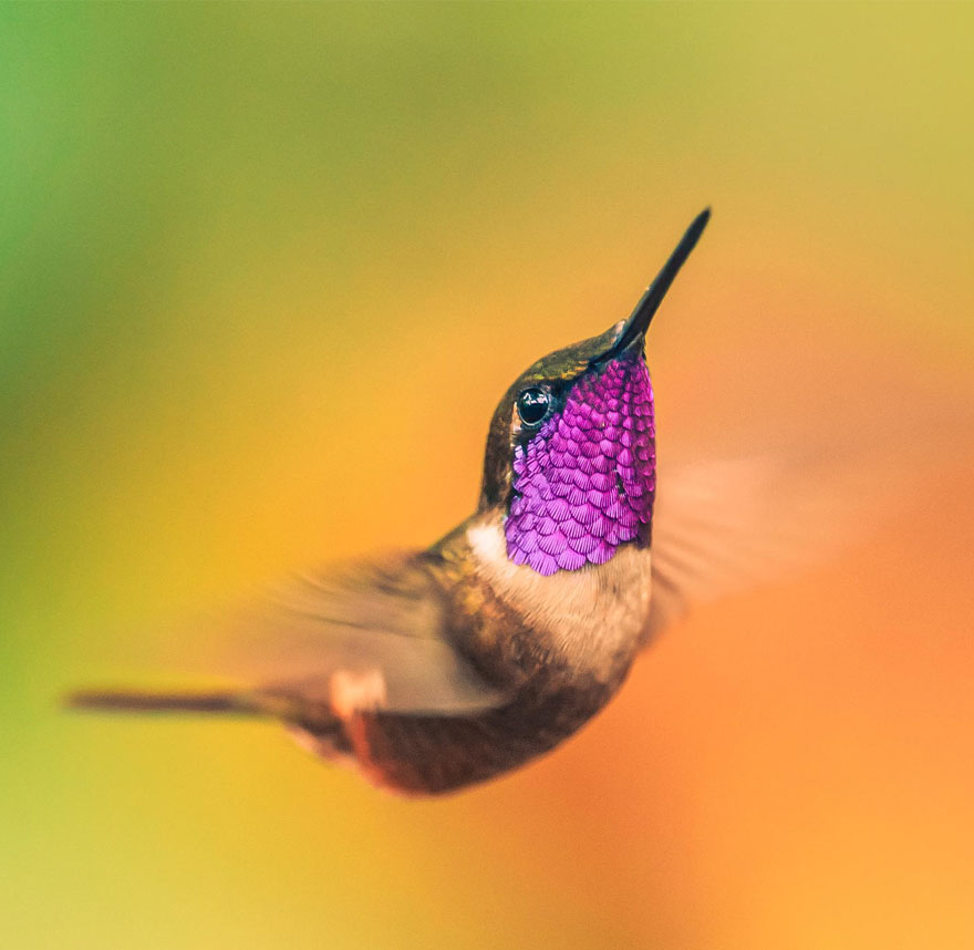 cute-beautiful-hummingbird-photography-20