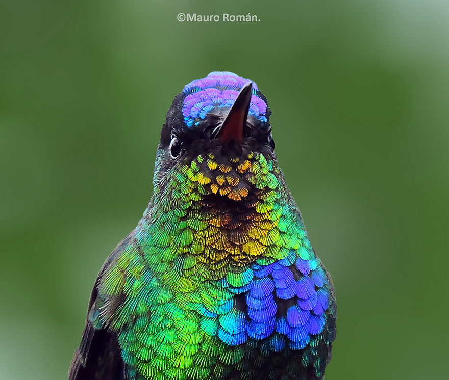 cute-beautiful-hummingbird-photography-4