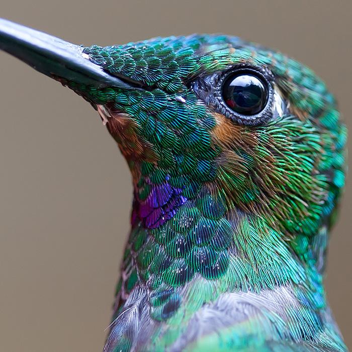 20 Vivid Hummingbird Close-ups Reveal Their Incredible Beauty
