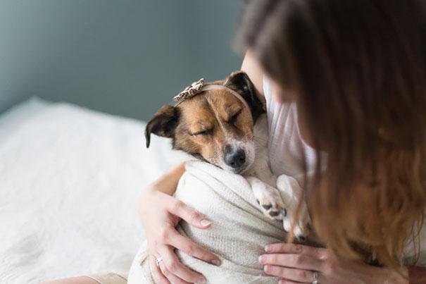 dog-baby-photos-snuggles-count-it-joy-jamie-clauss-1