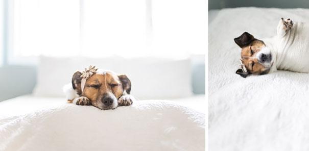 dog-baby-photos-snuggles-count-it-joy-jamie-clauss-22