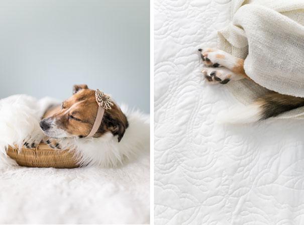 dog-baby-photos-snuggles-count-it-joy-jamie-clauss-26