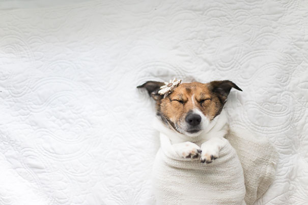 dog-baby-photos-snuggles-count-it-joy-jamie-clauss-4