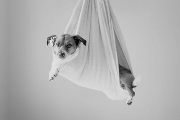 dog-baby-photos-snuggles-count-it-joy-jamie-clauss-7