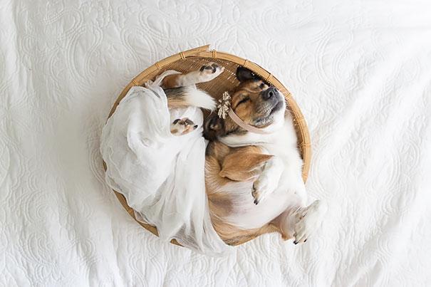 dog-baby-photos-snuggles-count-it-joy-jamie-clauss-8