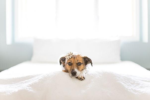 dog-baby-photos-snuggles-count-it-joy-jamie-clauss-9