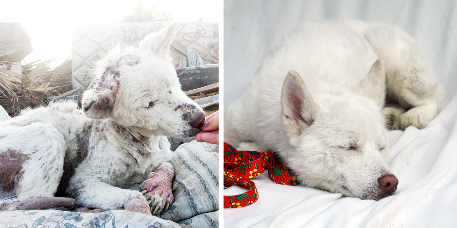 16 Before-And-After Photos Of Rescued Dogs