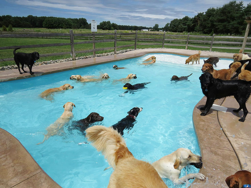 Dog Pool Shaped Like A Bone