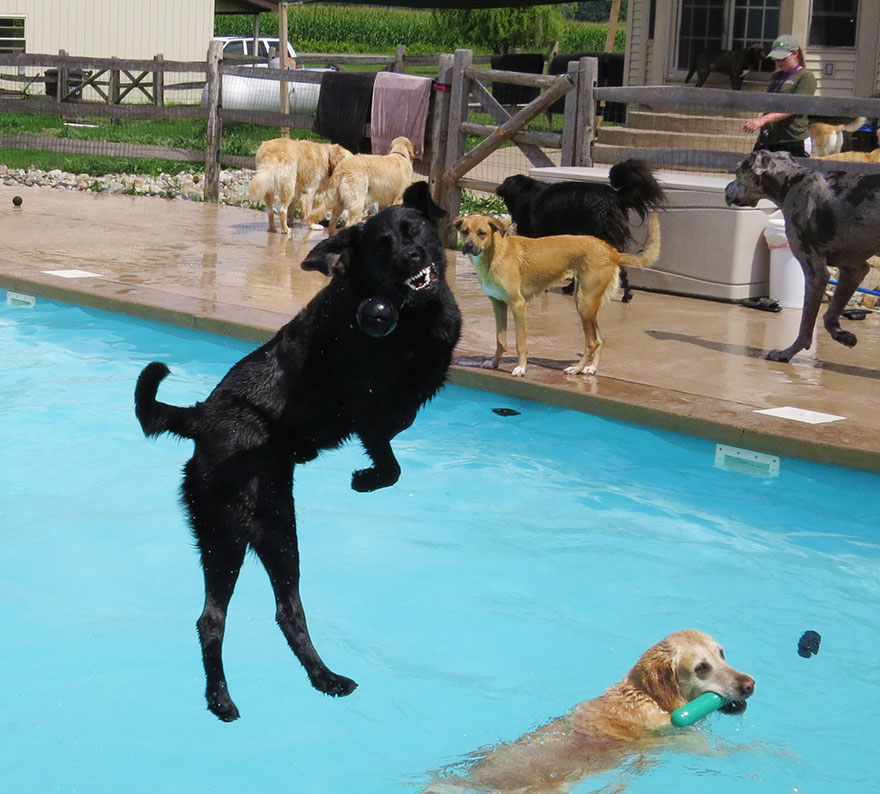 Puppy Pool Party Pool-party-lucky-puppy/