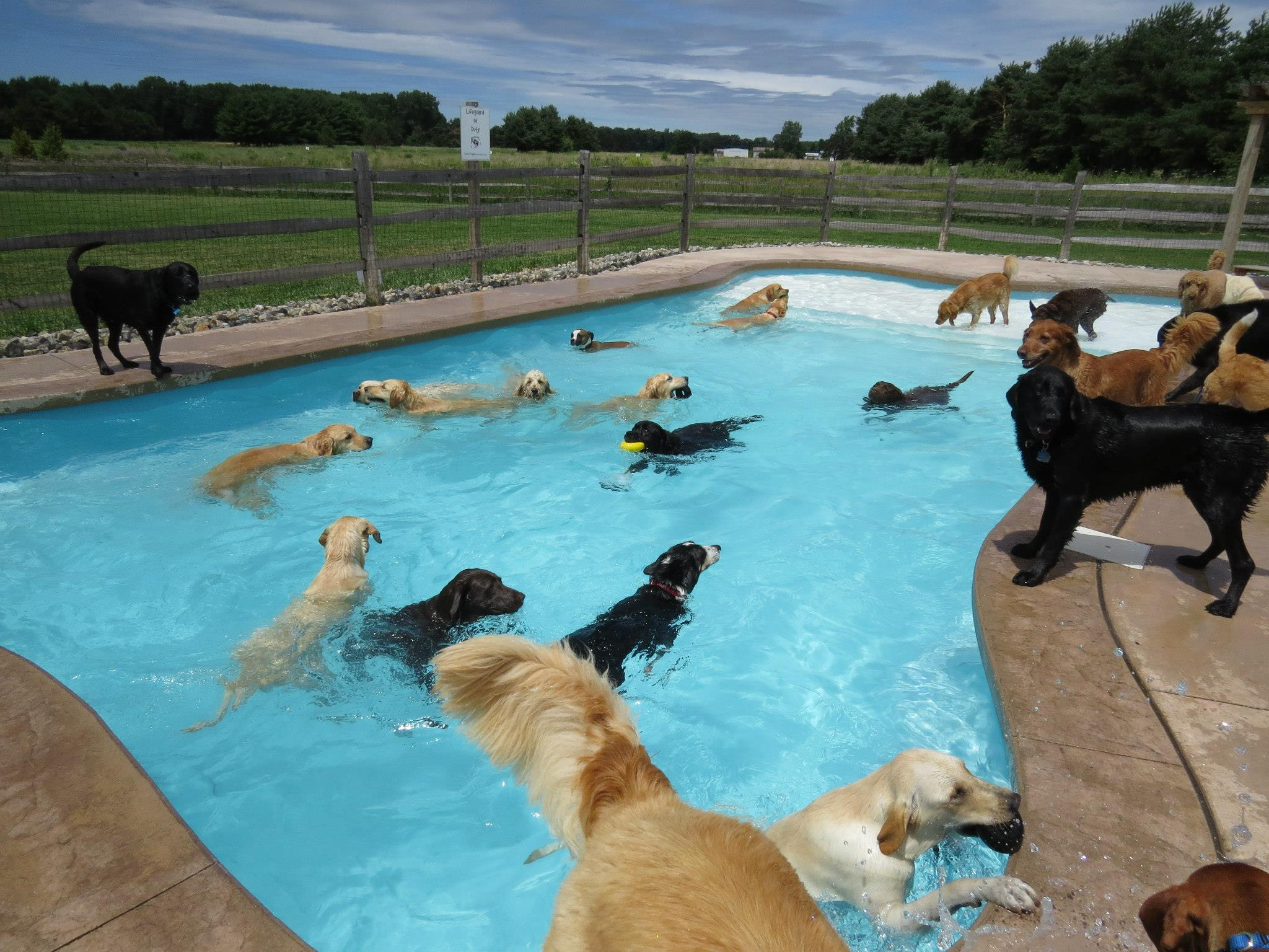 this is what a pool pawty at a dog daycare center looks like bored panda