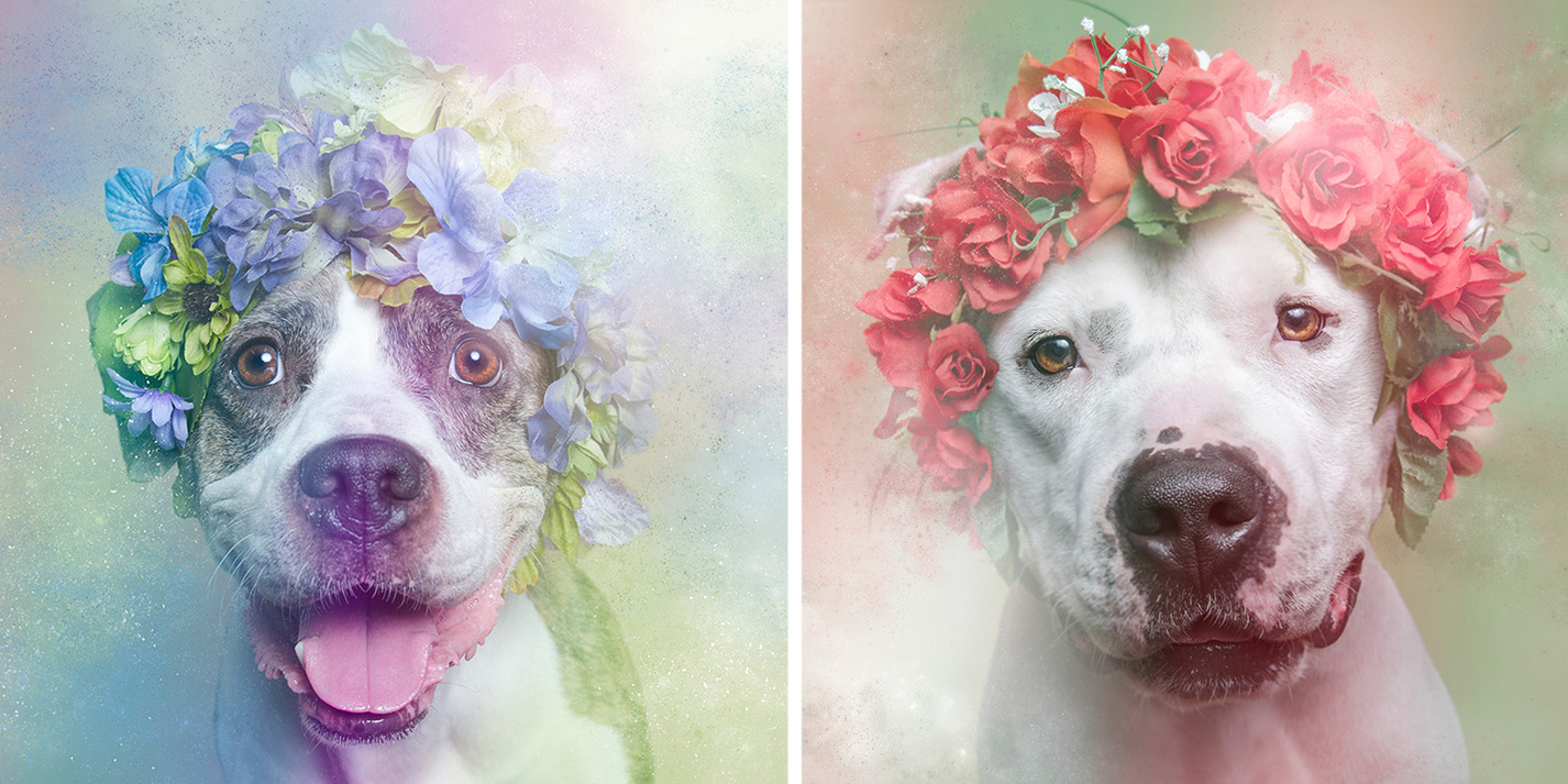 Artist graphs Pit Bulls In Floral Crowns To Show Their Softer