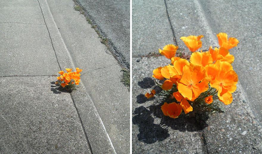 flower-tree-growing-concrete-pavement-11