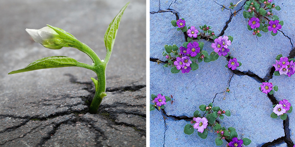 Life Finds A Way: 25 Plants That Just Won't Give Up