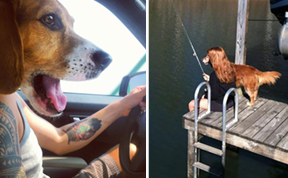 25 Perfectly Timed Dog Pictures