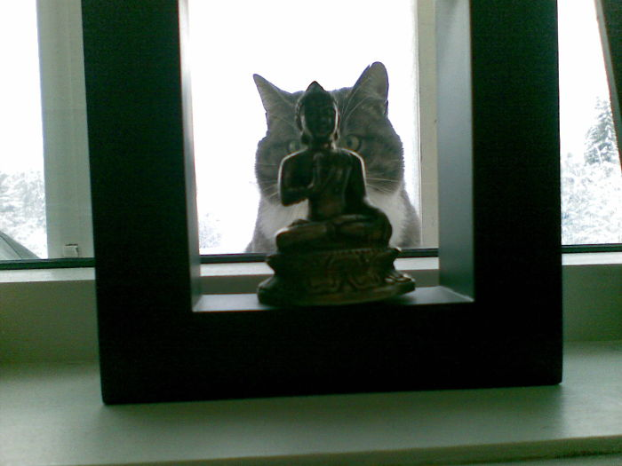 Buddha And Cattie