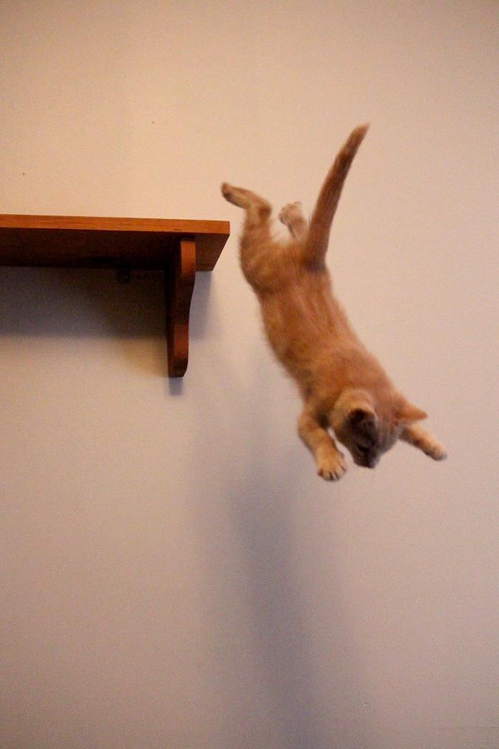 Kitty In Flight
