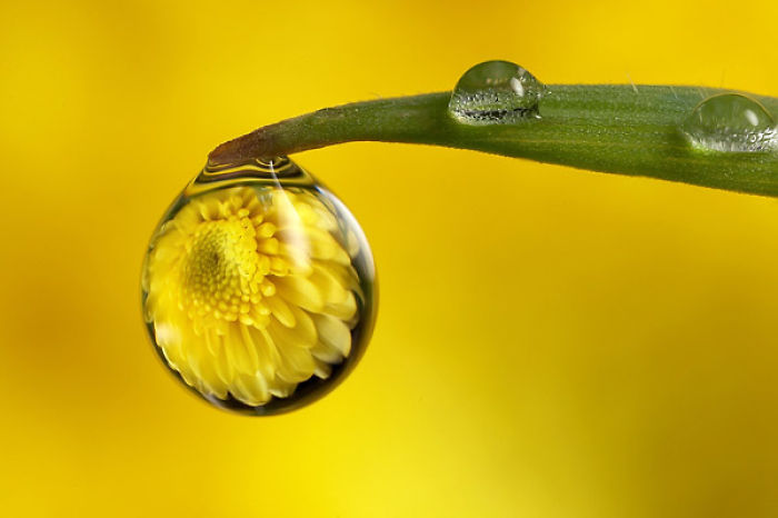 Droplet Photography ♥
