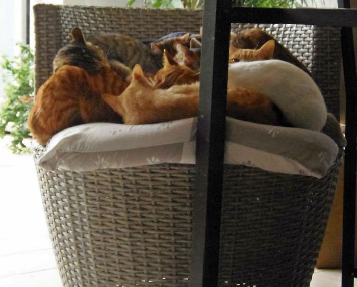 A Dozen Cat Pile Up. :-)