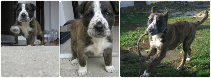Beni, The Reason Why I Love Dogs. 1st Pic: June. 3rd Pic: November.