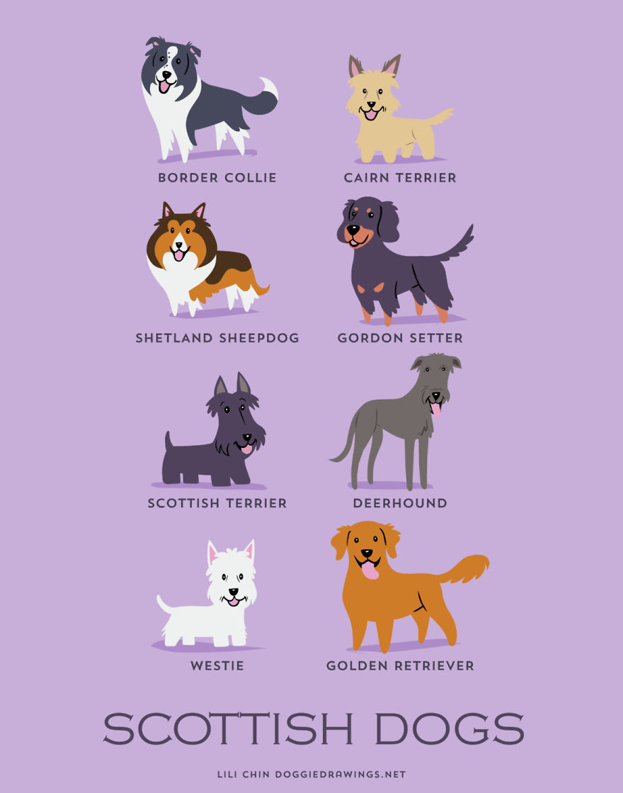 Dogs Of The World Cute Posters Show The Origins Of 200 Dog Breeds