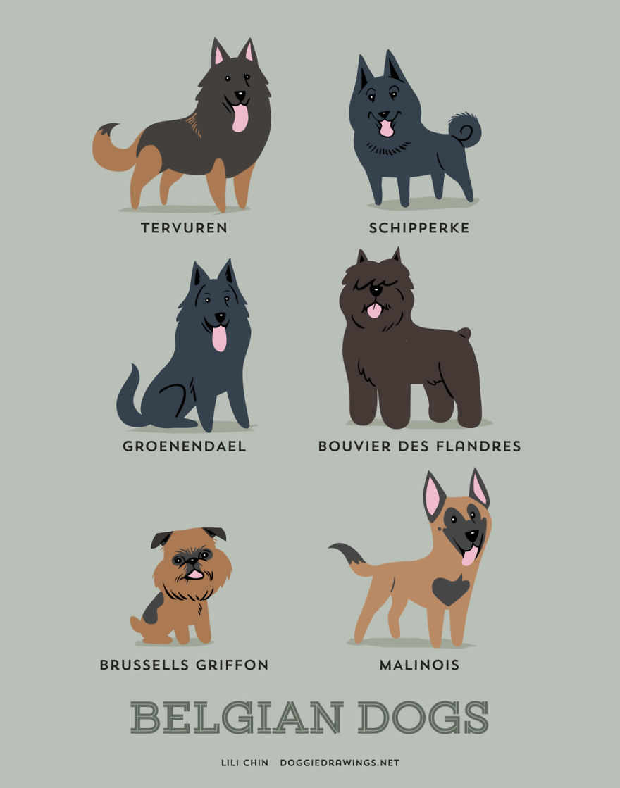 Dogs-Of-The-World-Cute-Poster-Series-Shows-The-Geographic-Origin-Of-Dog-Breeds3__880.jpg