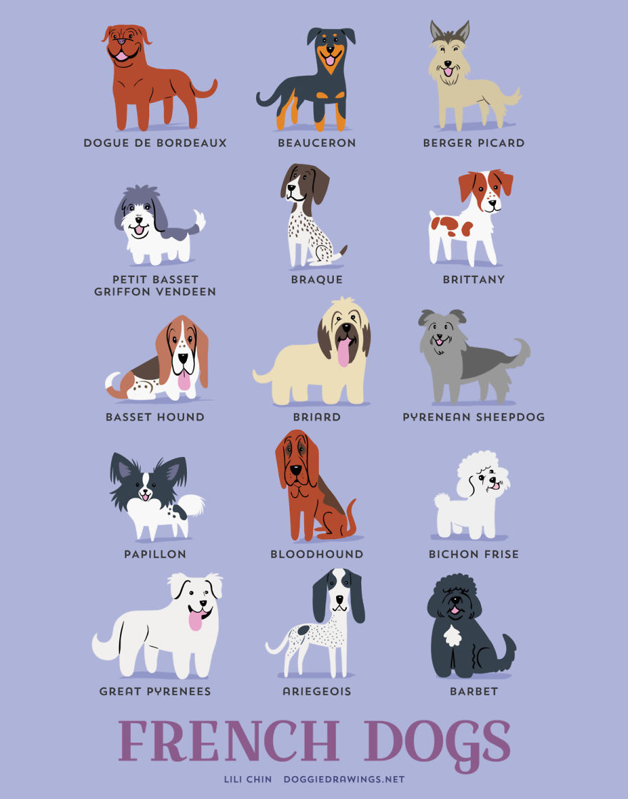 Dogs-Of-The-World-Cute-Poster-Series-Shows-The-Geographic-Origin-Of-Dog-Breeds6__880.jpg
