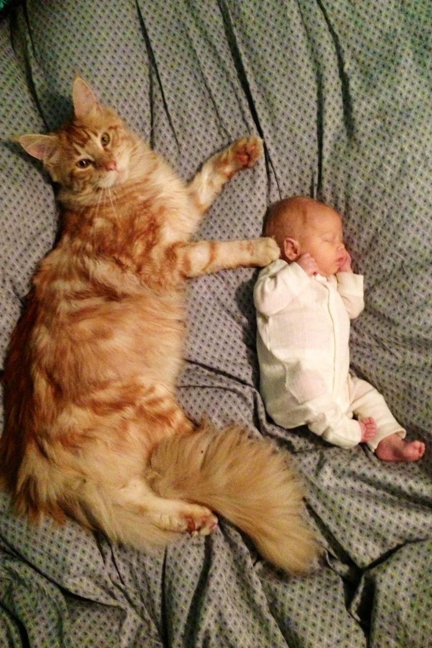 A Purrfect Babysitter..
