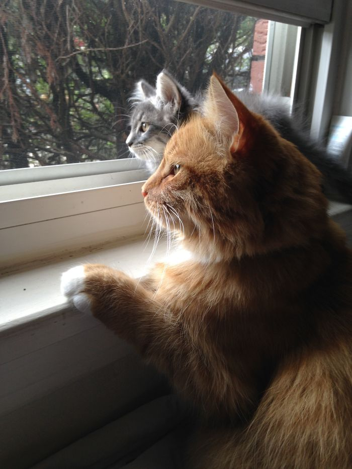 Weasley And Mowgli Checking Out The Quebec Wildlife