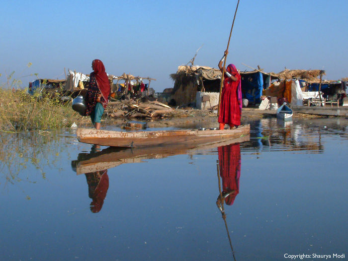 Morning Search – Nal Sarovar, Gujarat, India.